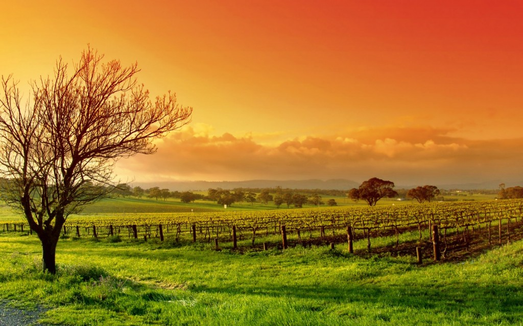 vineyard-wallpaper-26377-27068-hd-wallpapers