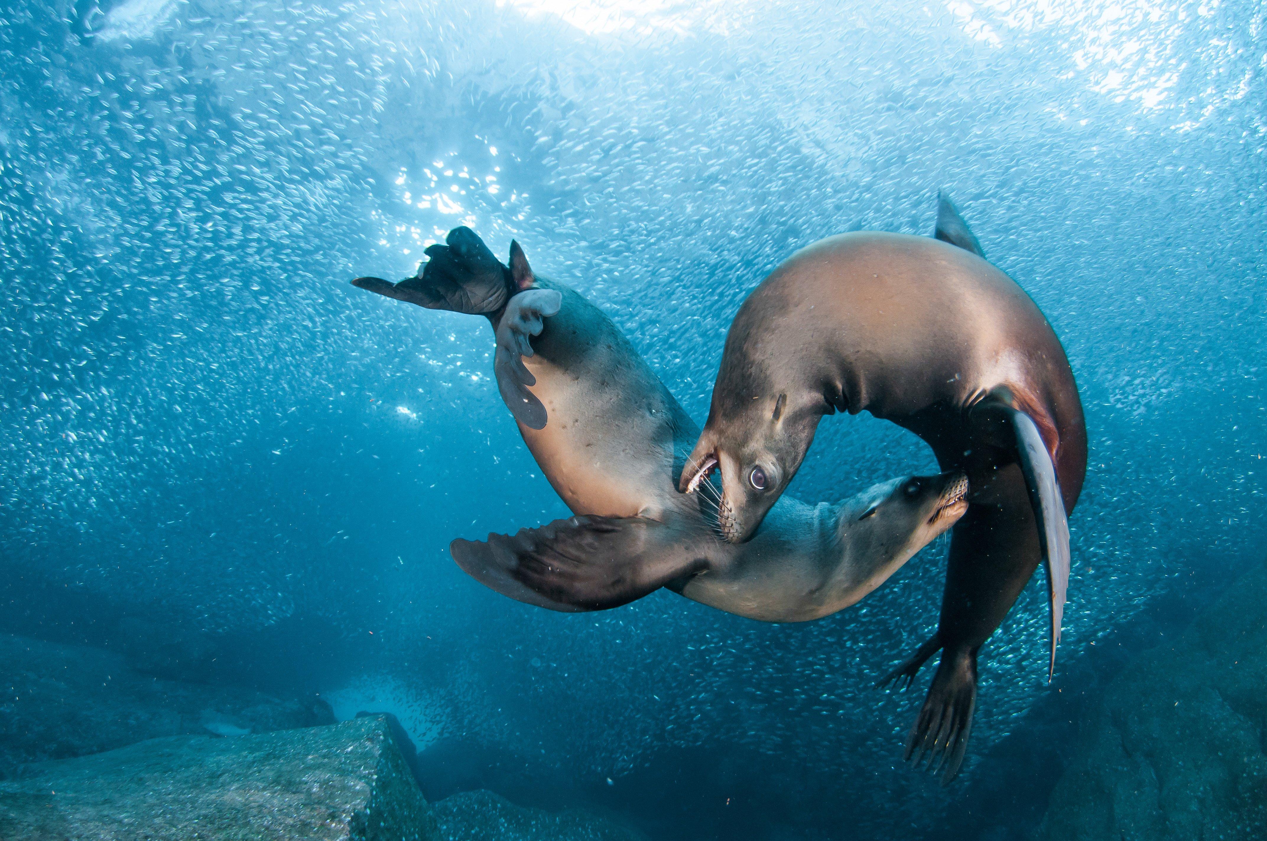 14 Fantastic HD Sea Lion Wallpapers - HDWallSource.com