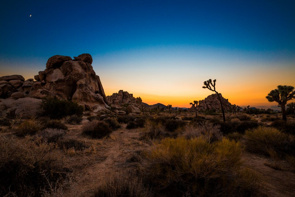 beautiful joshua tree wallpapers