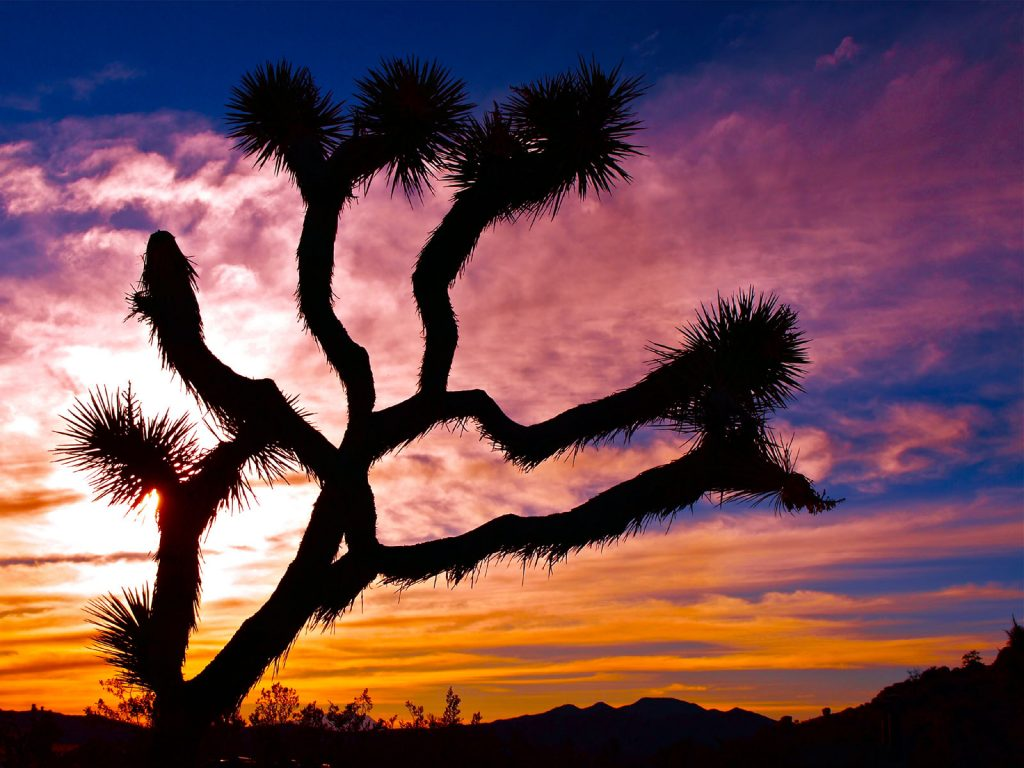 joshua tree wallpapers