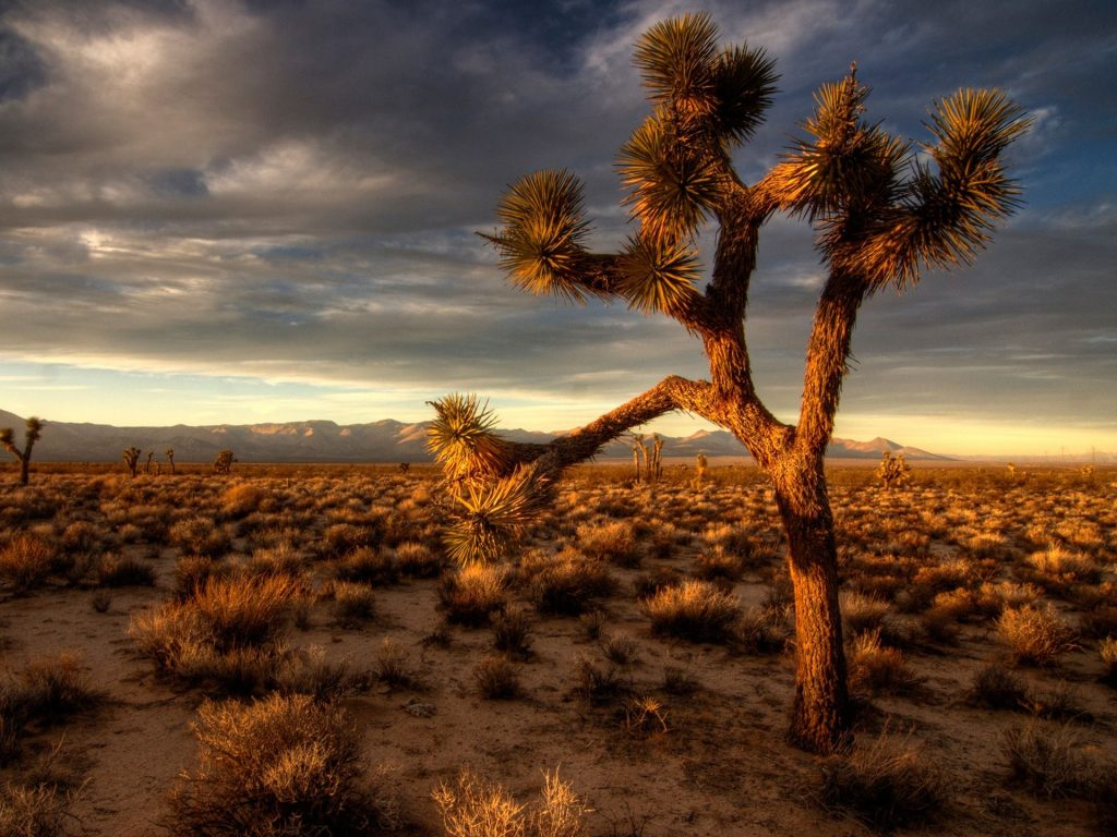 joshua tree computer wallpapers