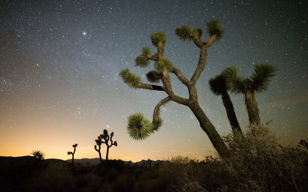 joshua tree night background wallpapers