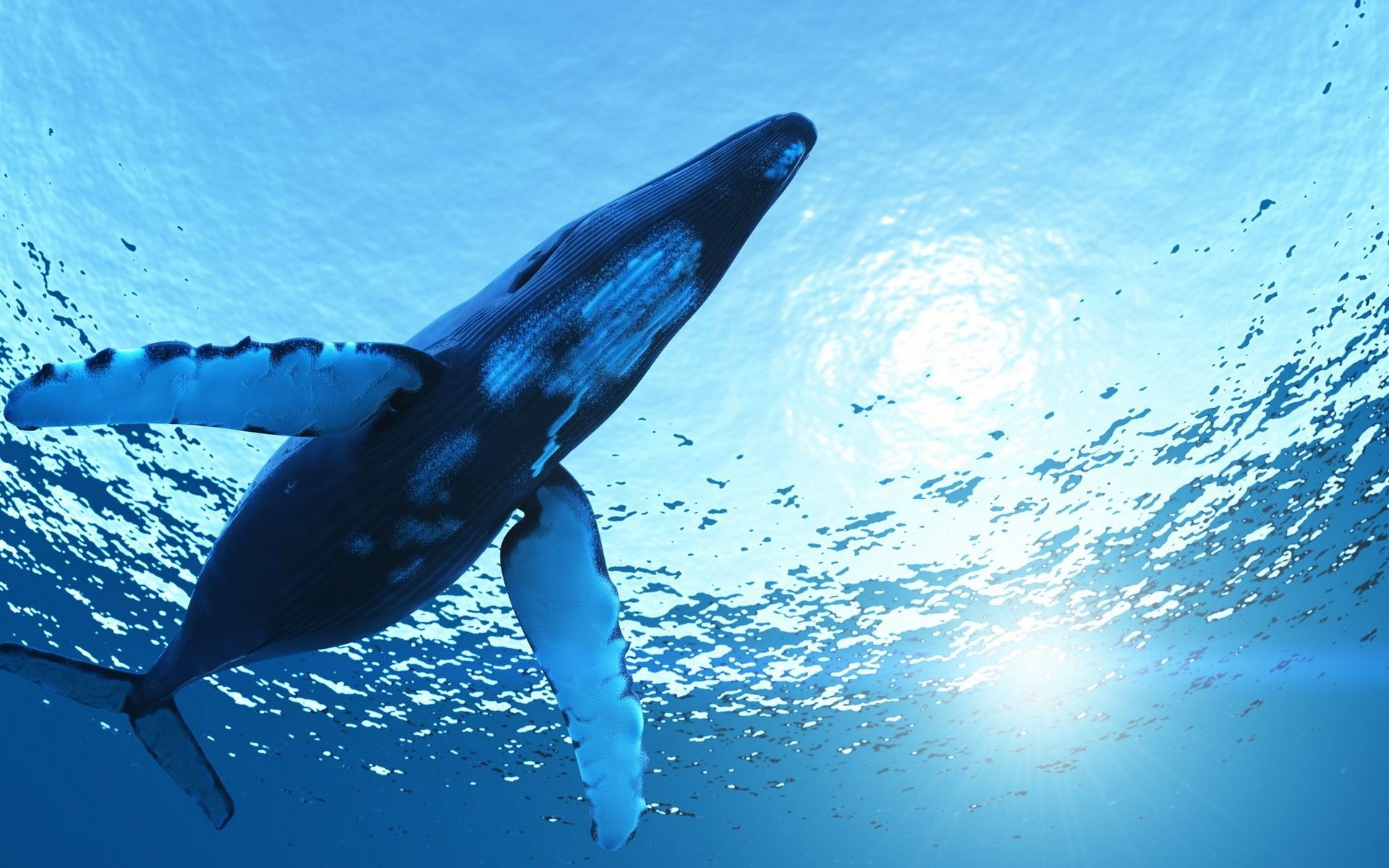 Whale wallpaper - photo#24