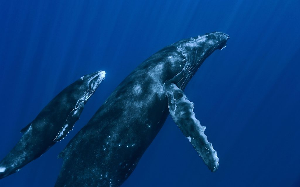 wonderful whale -wallpapers
