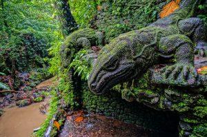 Komodo Dragon Wallpapers