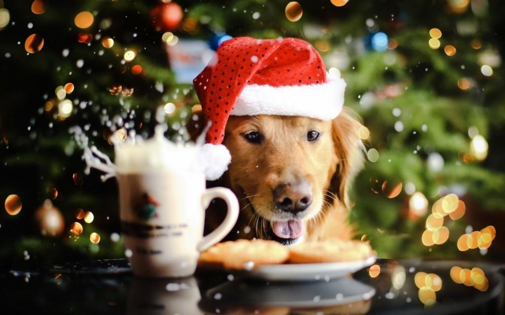 adorable-holiday-wallpaper-31572-32305-hd-wallpapers