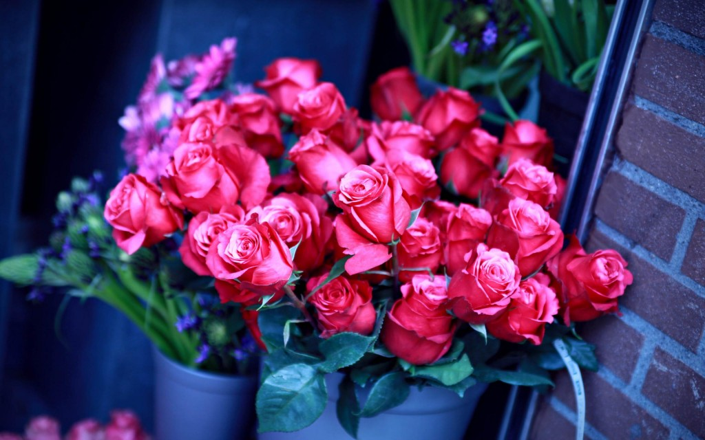 beautiful-roses-wallpaper-26109-26794-hd-wallpapers