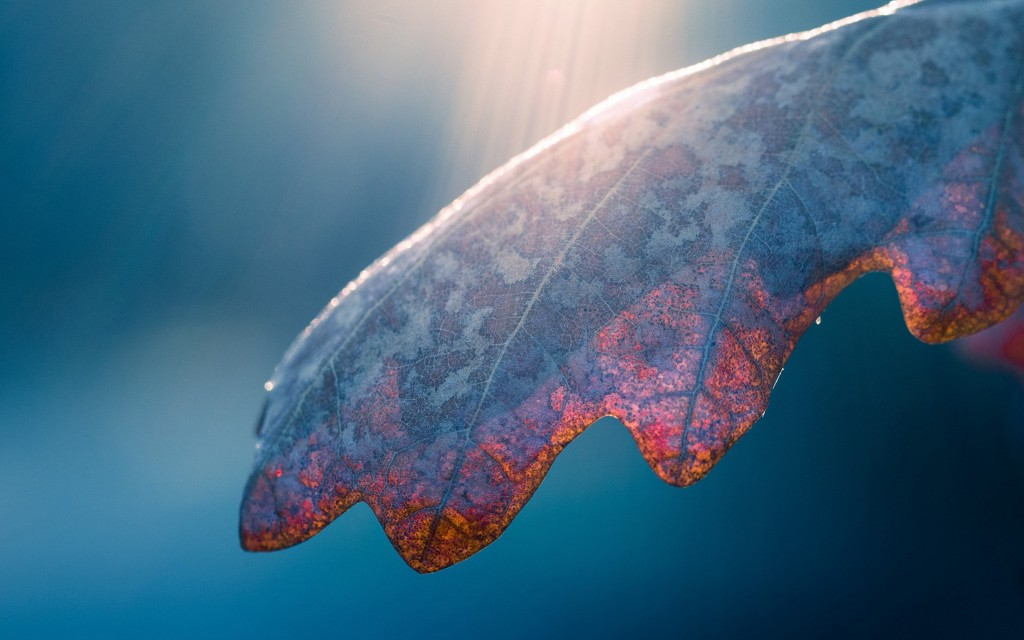 fantastic-leaf-macro-wallpaper-39011-39907-hd-wallpapers