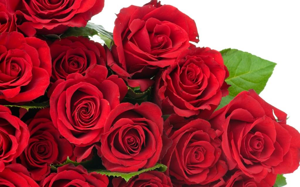 roses-wallpaper-26097-26782-hd-wallpapers