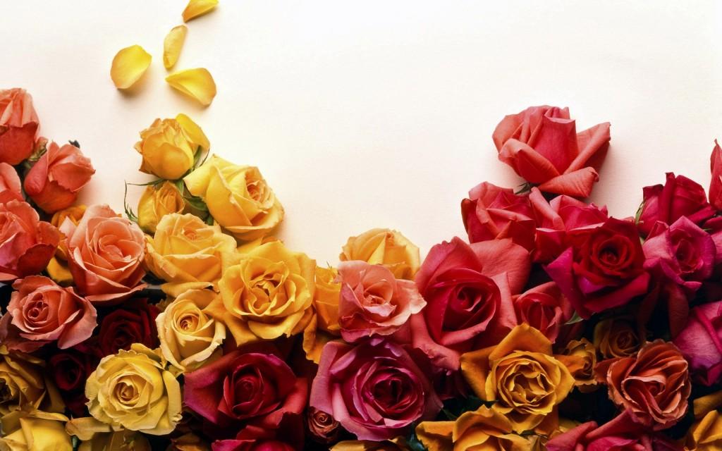 roses-wallpaper-26111-26796-hd-wallpapers