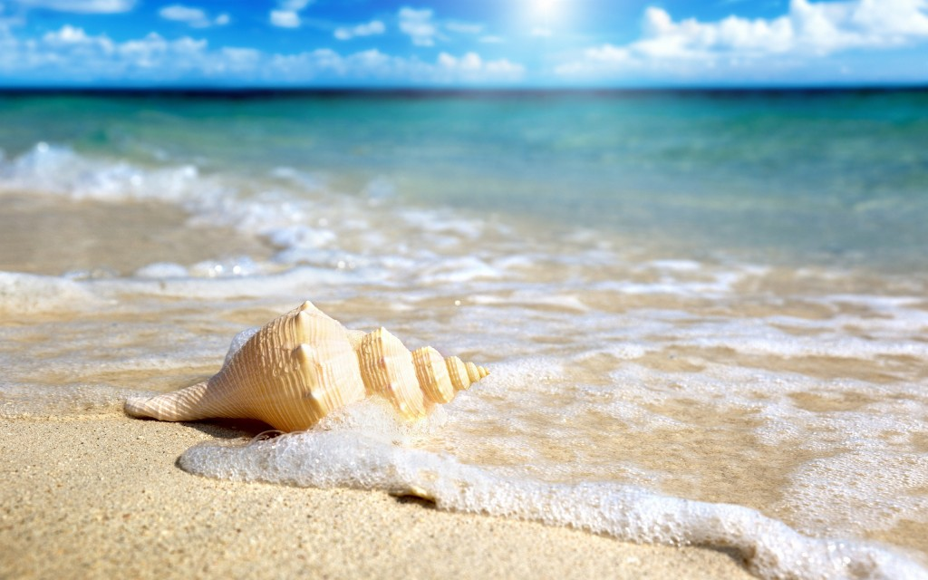 wonderful-beach-shell-wallpaper-41192-42177-hd-wallpapers