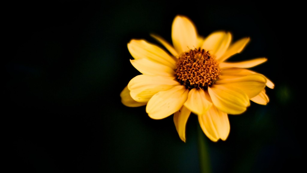 yellow-macro-37414-38273-hd-wallpapers