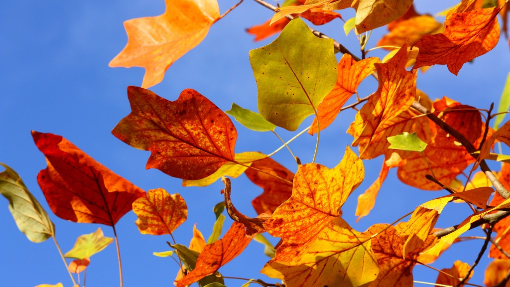 colorful-leaves-background-30075-30793-hd-wallpapers