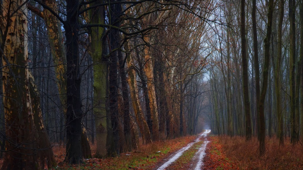 cool forest road wallpapers