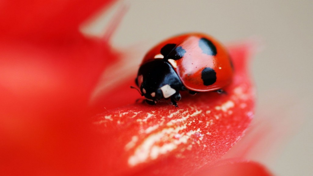 fantastic-ladybug-wallpaper-43701-44771-hd-wallpapers