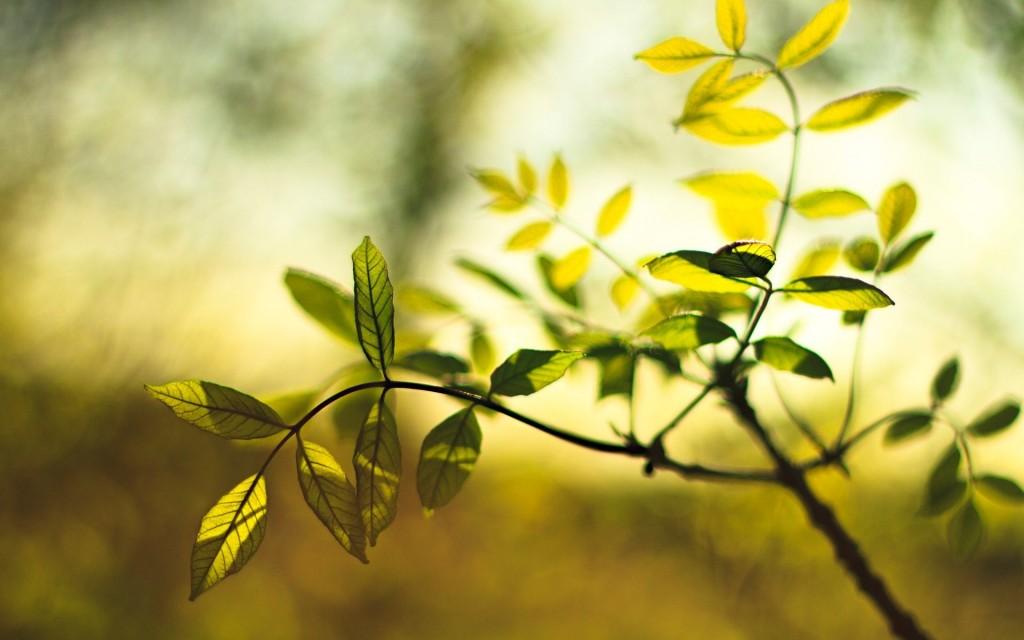 gorgeous-leaves-macro-wallpaper-39023-39919-hd-wallpapers