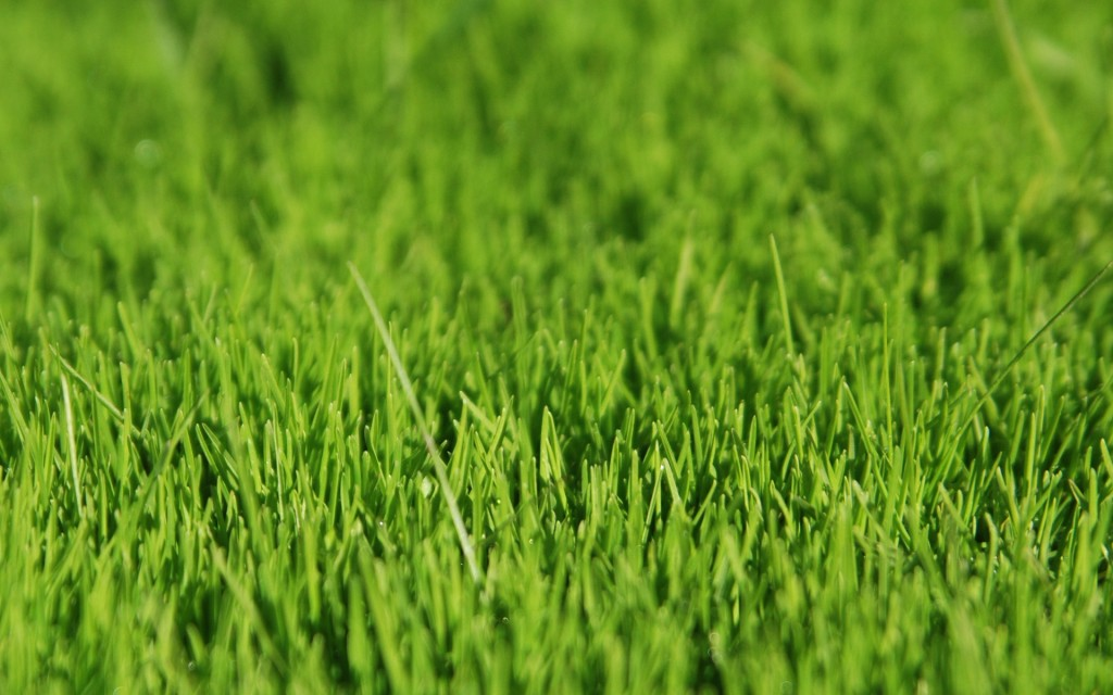 grass-background-18860-19340-hd-wallpapers
