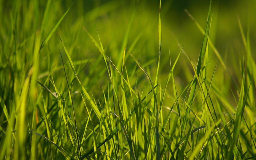 grass-wallpaper-13878-14295-hd-wallpapers