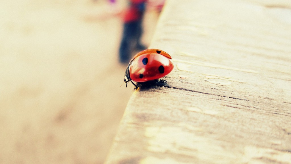 ladybug-wallpaper-hd-43696-44766-hd-wallpapers