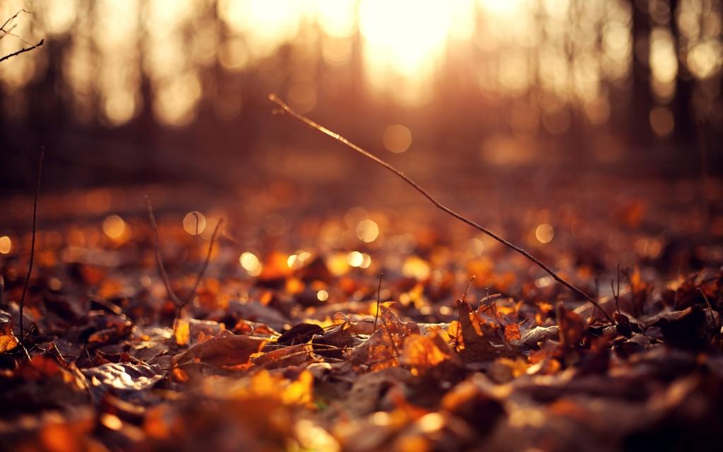 leaves-macro-background-39001-39897-hd-wallpapers
