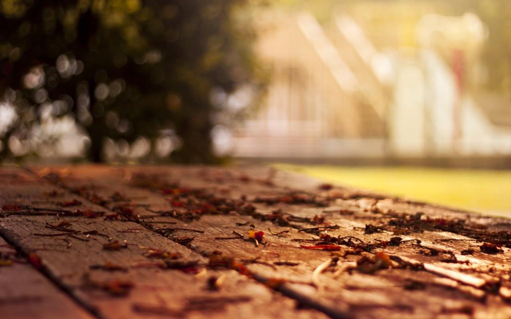 leaves-macro-wallpaper-39022-39918-hd-wallpapers
