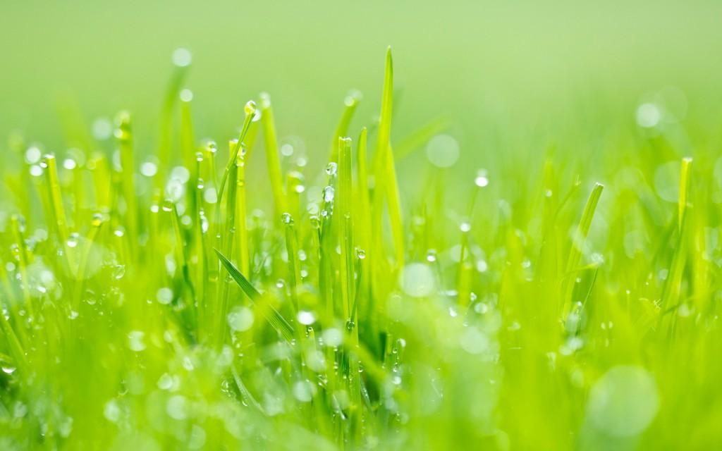 lovely-grass-wallpaper-42333-43332-hd-wallpapers