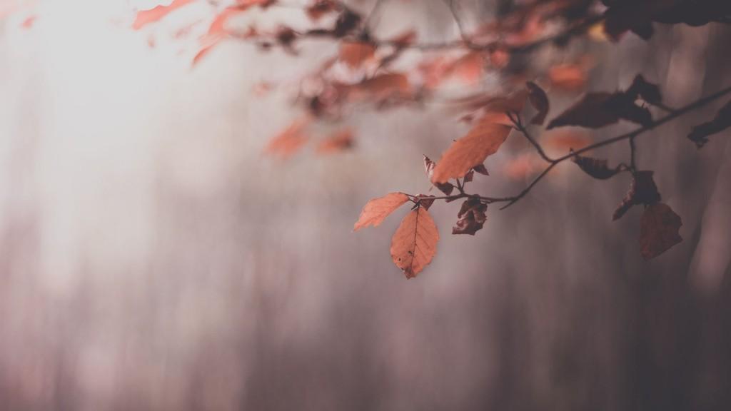 lovely-leaves-macro-wallpaper-39012-39908-hd-wallpapers
