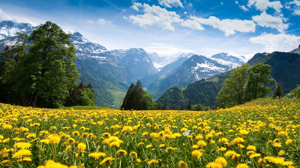 mountain meadow wallpapers