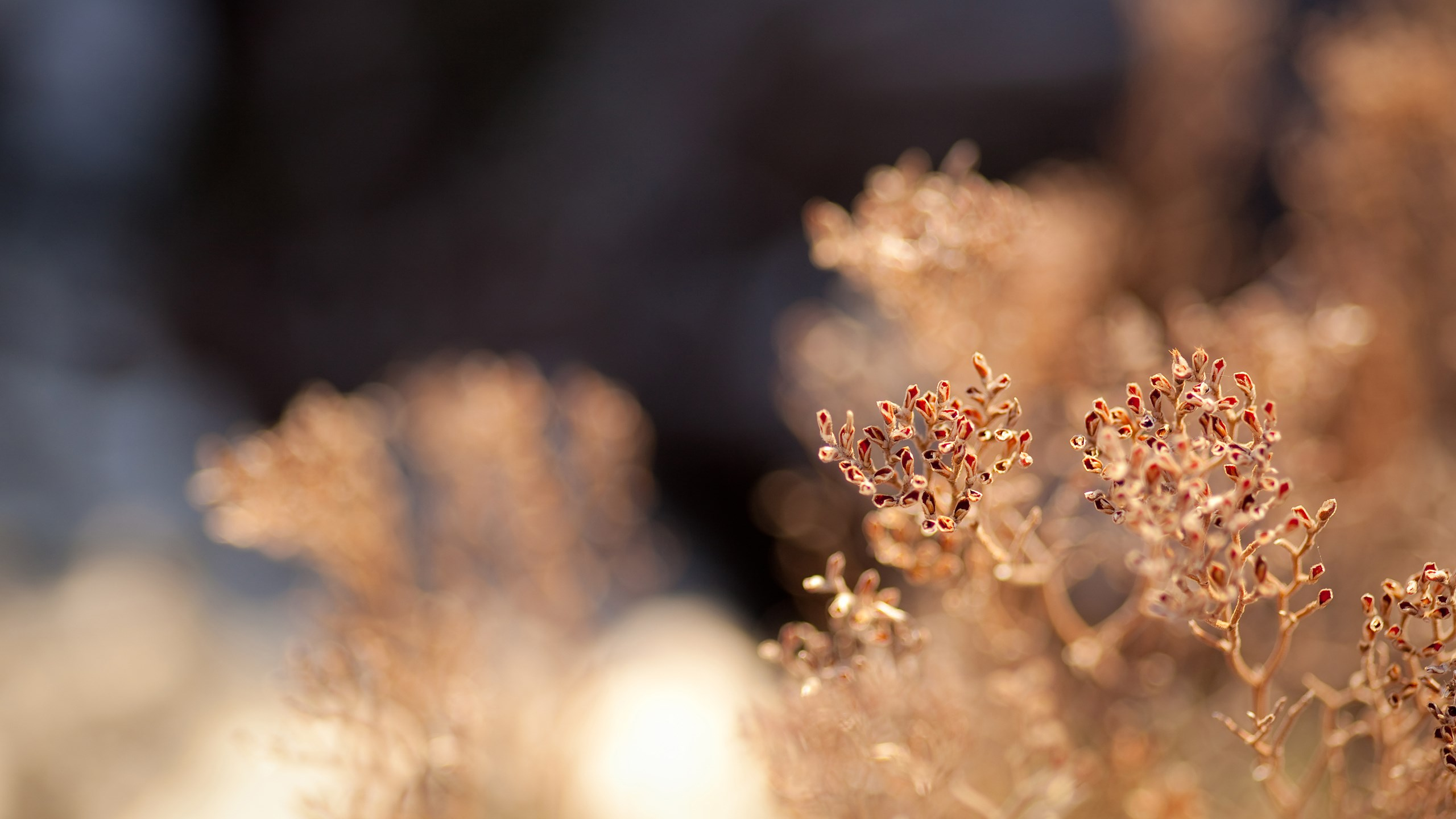 Pinterest Photography: 20 Beautiful HD Nature Wallpapers