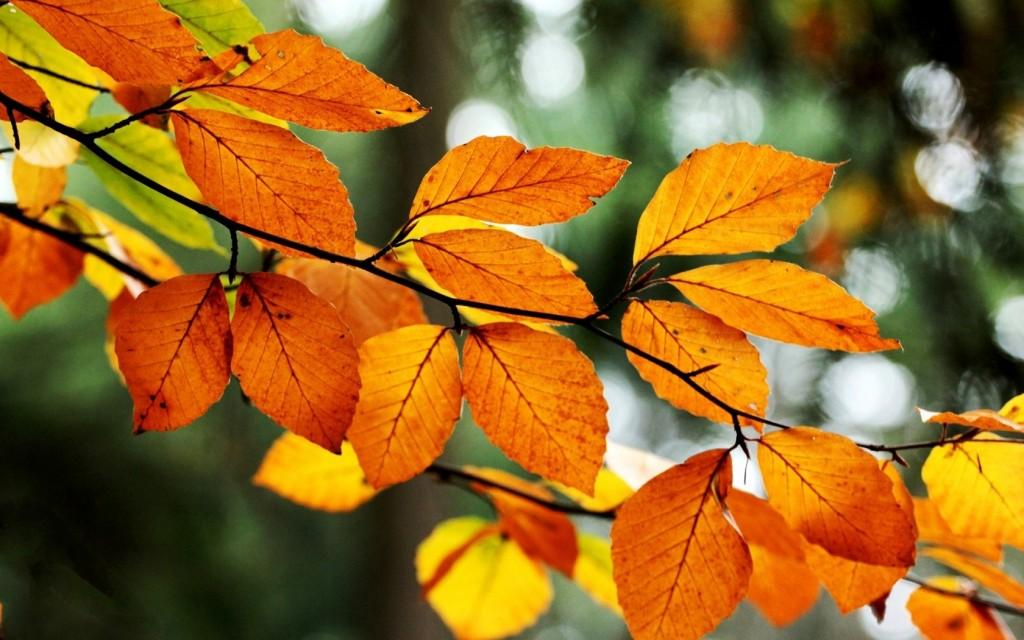 orange-leaves-33489-34246-hd-wallpapers