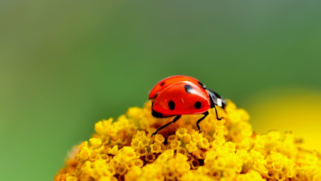 pretty-ladybug-wallpaper-43697-44767-hd-wallpapers