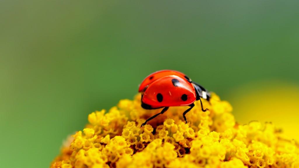pretty-ladybug-wallpaper-43697-44767-hd-wallpapers