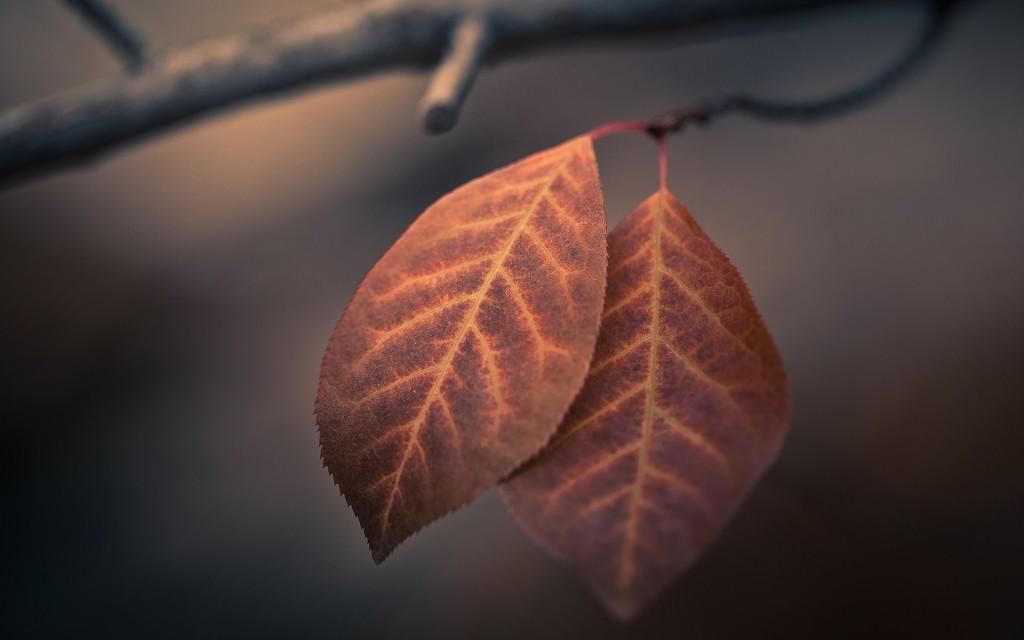 pretty-leaves-macro-wallpaper-39026-39922-hd-wallpapers