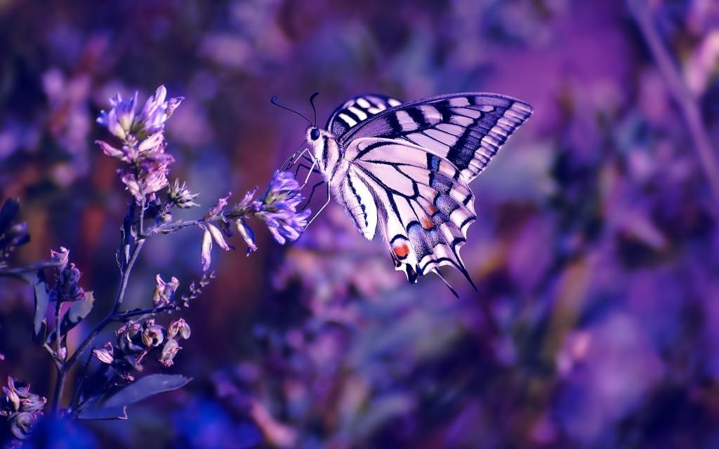 purple-macro-wallpaper-37992-38862-hd-wallpapers