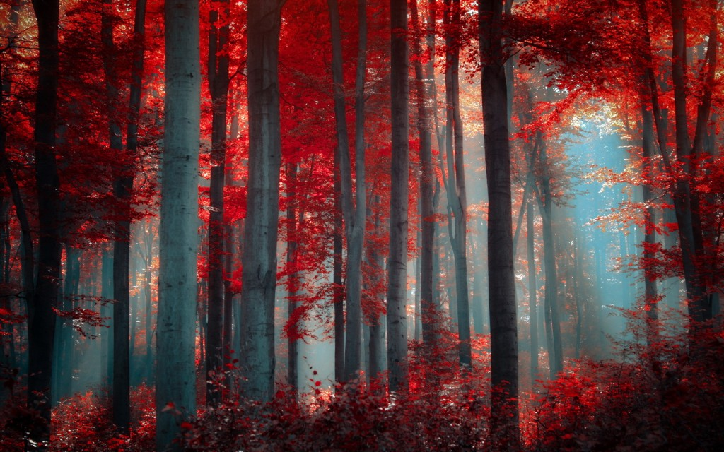 red-forest-33536-34292-hd-wallpapers