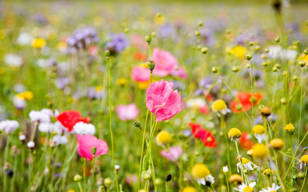 spring meadow hd wallpapers