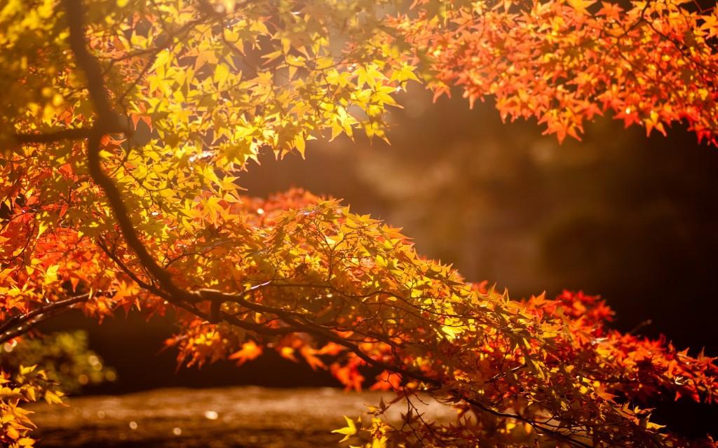 sunlight-36059-36883-hd-wallpapers