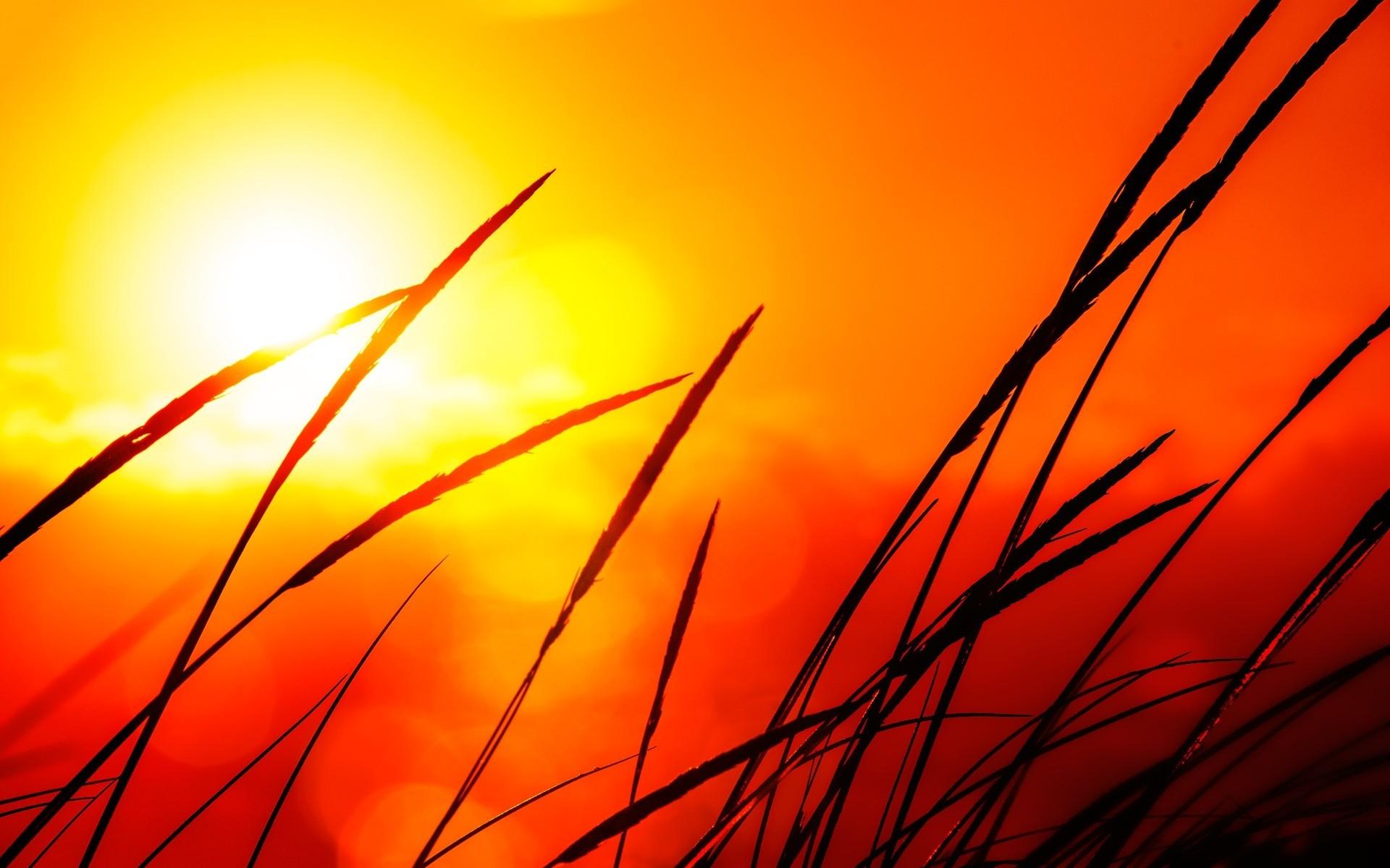 12 Pretty HD Sunlight Wallpapers
