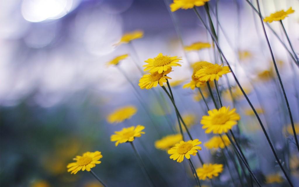 yellow-macro-background-37397-38256-hd-wallpapers