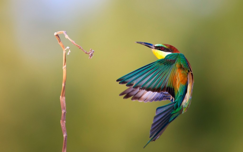 awesome-bird-wallpaper-41738-42720-hd-wallpapers