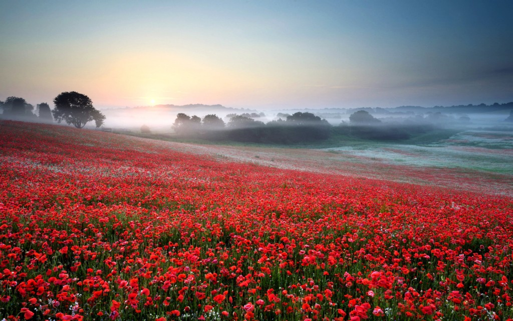 beautiful-poppy-field-32142-32880-hd-wallpapers