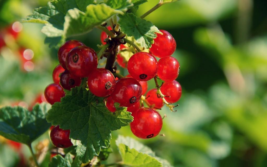 currant-berries-wallpaper-44422-45547-hd-wallpapers