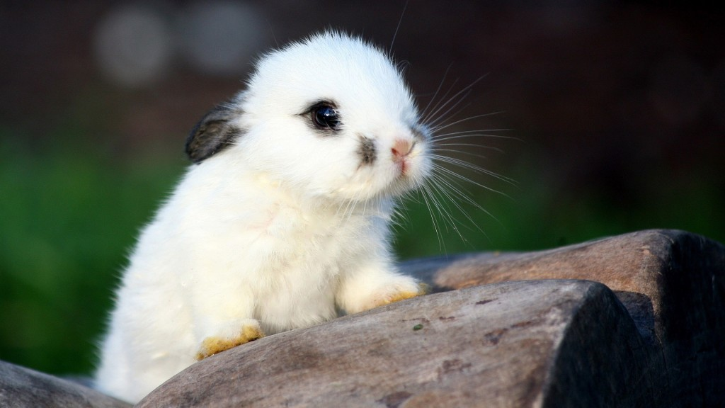 cute-baby-animal-wallpaper-34420-35195-hd-wallpapers