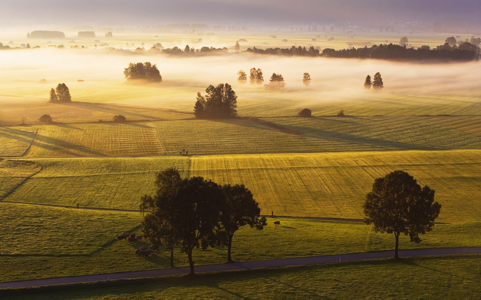 15 Wonderful HD Field Wallpapers