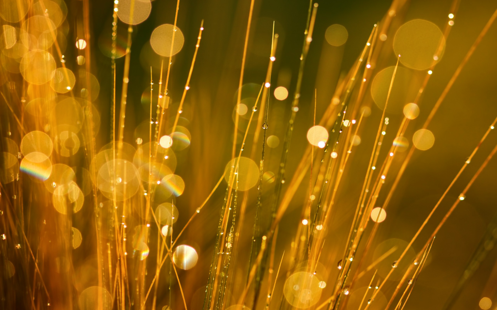 gold-bokeh-wallpaper-26007-26691-hd-wallpapers.jpg
