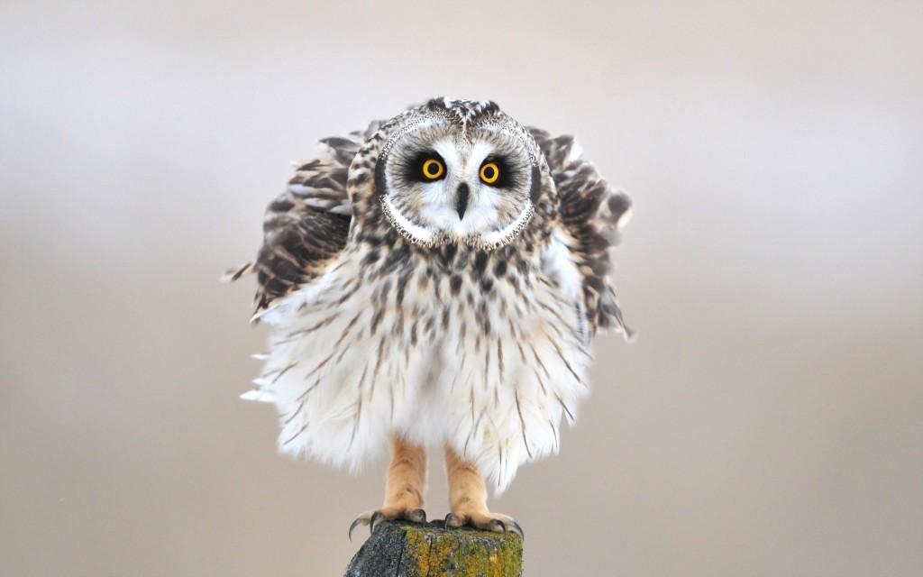 stunning-bird-up-close-wallpaper-43152-44183-hd-wallpapers