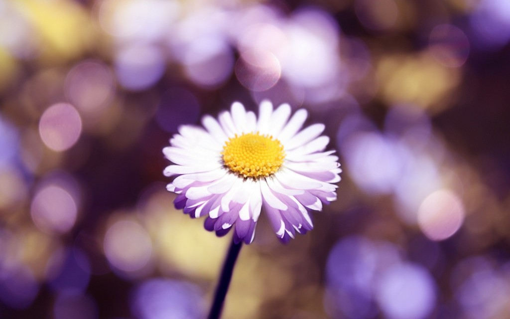 stunning-daisy-bokeh-wallpaper-39247-40152-hd-wallpapers