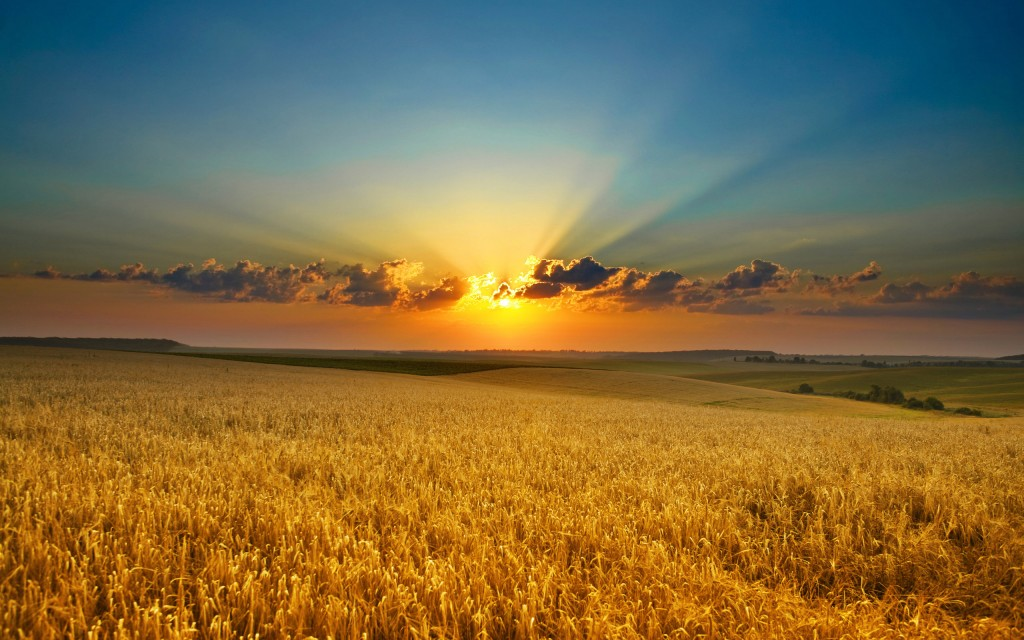 stunning-field-wallpaper-31074-31806-hd-wallpapers