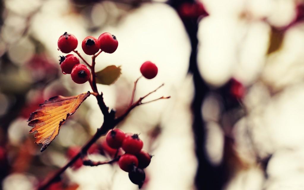 tree-berries-wallpaper-44423-45548-hd-wallpapers