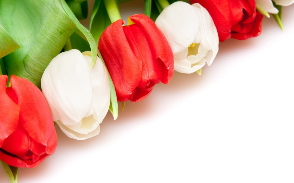 tulips-12612-13002-hd-wallpapers